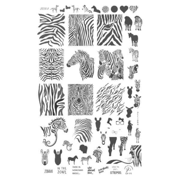 Wild Kingdom – Zebra